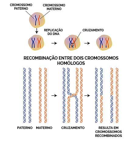Recombinação homóloga